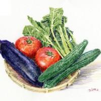 夏野菜、色鉛筆画