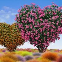 ハートバラの木