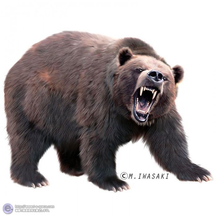 クマの画像 p1_15