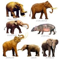 ゾウの進化ページから一部抜粋