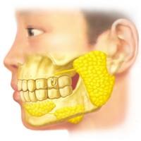 耳下線の図解
