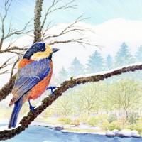 山雀、色鉛筆画