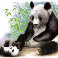 学研こども図鑑 パンダ