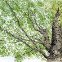 樹木、色鉛筆画