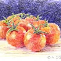 プチトマト、色鉛筆画