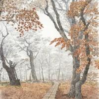 晩秋の檜洞、色鉛筆画