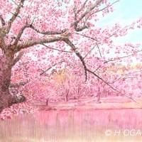 称名寺桜、色鉛筆