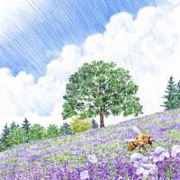 ラベンダー畑、色鉛筆画