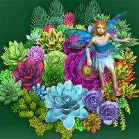 花の妖精(多肉植物)