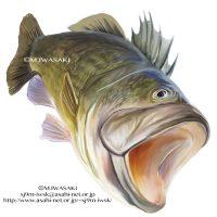 魚リアルイラスト2
