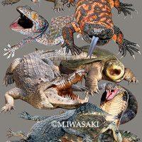 動物リアルイラスト・爬虫類