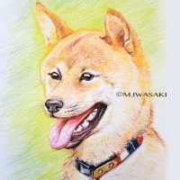 動物リアルイラスト・色鉛筆・柴犬