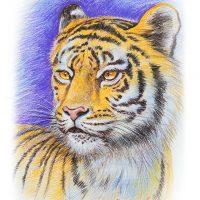 動物リアルイラスト・色鉛筆・トラ