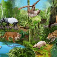 動物イラスト・アマゾンの生物1