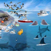 動物リアルイラスト・海の生物
