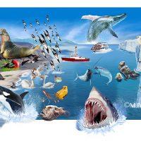 動物リアルイラスト・海の生物2