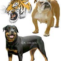 動物リアルイラスト・犬